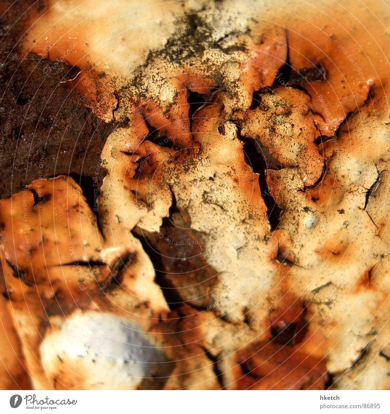 Magengeschwür Rust Rost Eisen Zaun rostfrei Stahlträger ungesund verfallen Vergänglichkeit rusty rostbraun rostschutzmittel Lack korrodiert corroded einfriedung