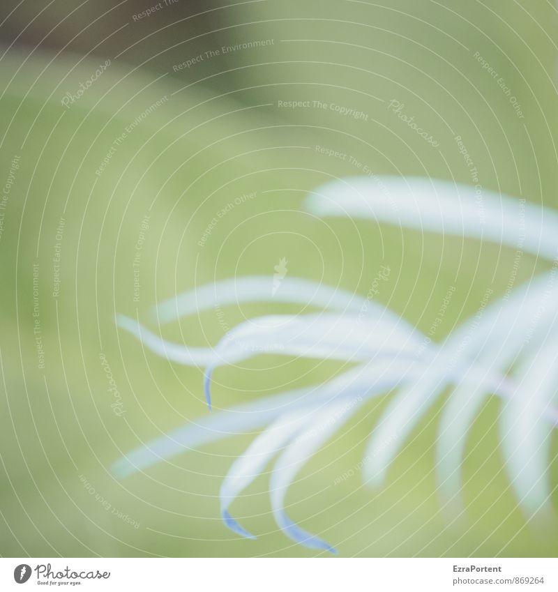 alles klar? Umwelt Natur Landschaft Pflanze Frühling Sommer Blume Blatt Blüte Garten ästhetisch natürlich blau grün Clematis dezent zart blütenblattartig