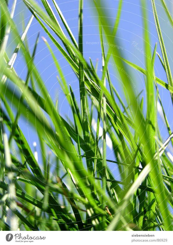 Hier und Jetzt Gras grün Wachstum Wiese frisch Halm Blühend Jahreszeiten Sommer Frühling Nahaufnahme Kraft Perspektive Naturphänomene Grasnarbe Saison Grasland