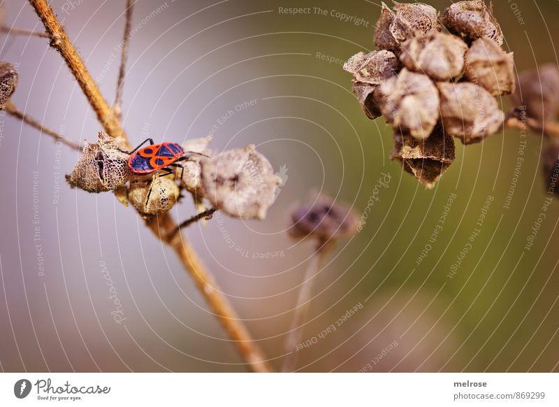 Käferparadies Natur Pflanze Sommer Schönes Wetter Wildpflanze Feld Wald Tier Käferbein Muster 1 sitzen außergewöhnlich braun grün orange Zufriedenheit Pause