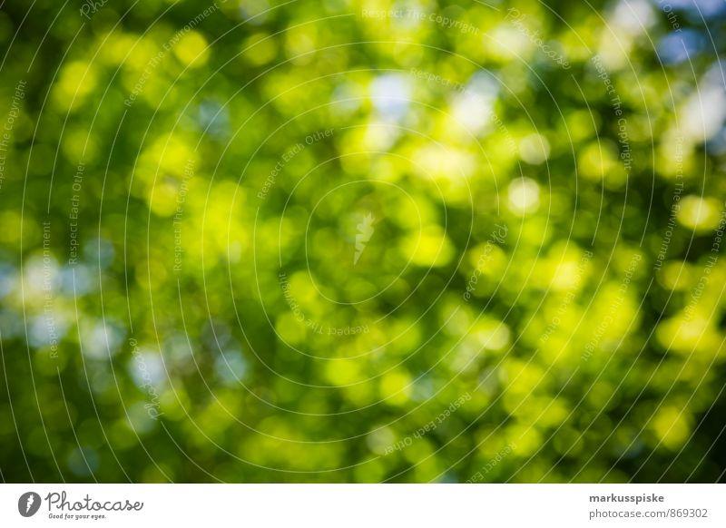 green bokeh Natur Pflanze grün Sommer Sonne Baum Landschaft Blatt Tier Umwelt Blüte Frühling Park Wetter Wachstum Schönes Wetter