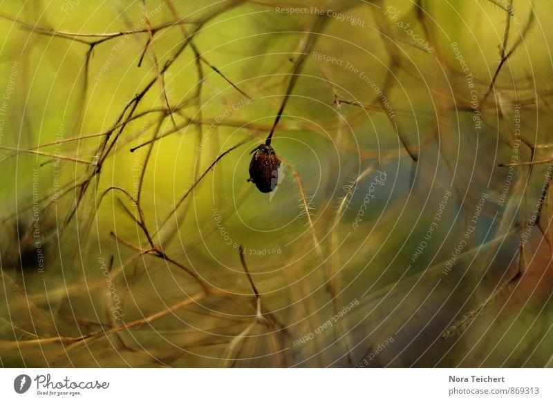 Verzweigt Umwelt Natur Pflanze Luft Sommer Herbst Klima Wetter Schönes Wetter Wind Sturm Baum Blume Sträucher Wildpflanze Garten Park Wald blau braun gelb