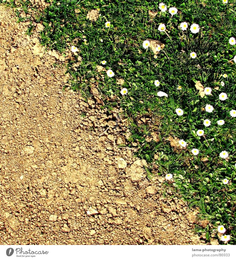 Spring Disparity IV-The End grün Sommer Blume Freude Frühling Wiese Wege & Pfade Stein braun Sand springen Feld Erde Fußweg Hoffnung Rasen