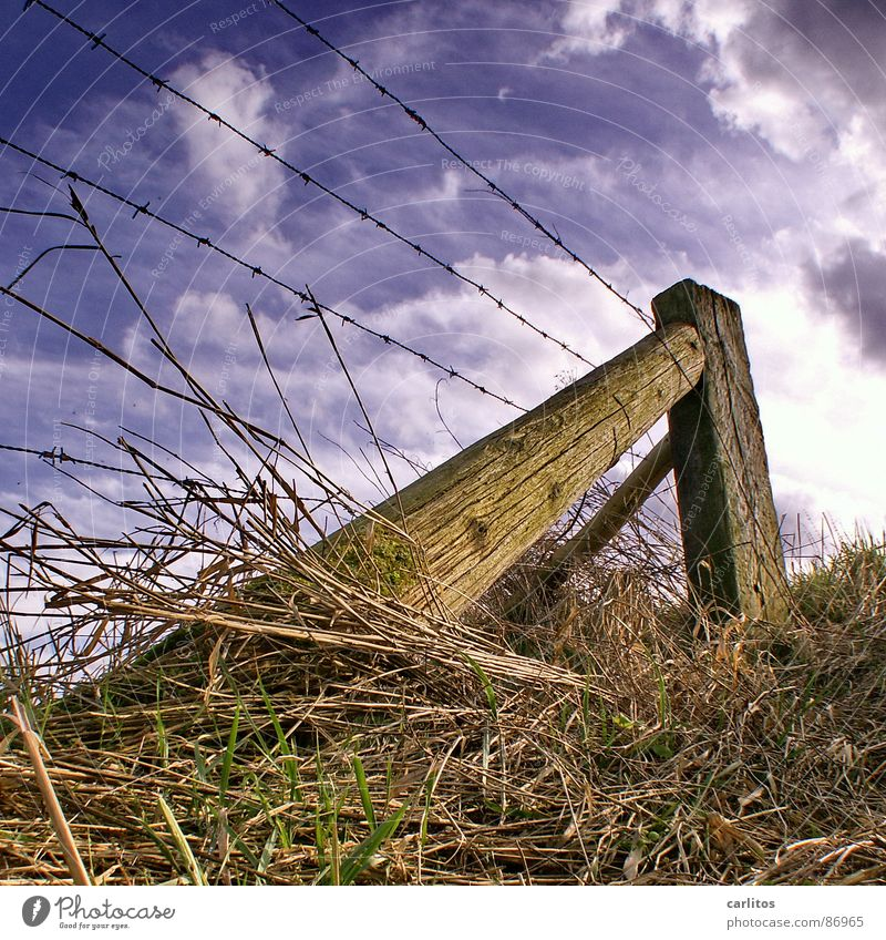 Im Märzen der Bauer ... Frühling Pflanze Feld Weidezaun diagonal Draht Stacheldraht Zaun Froschperspektive Gras Blick Grenze Am Rand grün Wolken Abstützung