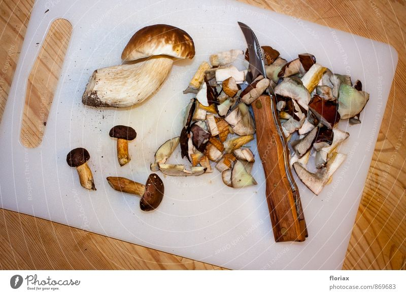 nach dem pilzspaziergang. Pflanze Wald Umwelt Herbst Holz Essen braun Lebensmittel Metall Angst Erde ästhetisch Ernährung Abenteuer Kunststoff Stengel