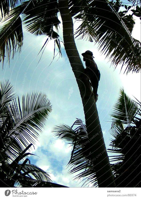 palmenkletterer Palme Bali Sommer Ferien & Urlaub & Reisen Wolken Strand Indonesien Asien Himmel