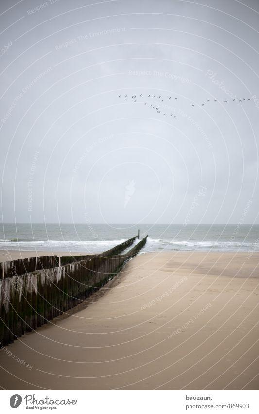 flugshow. Himmel Natur Ferien & Urlaub & Reisen Wasser Meer Erholung Landschaft ruhig Wolken Strand Ferne Holz Freiheit Sand fliegen Horizont