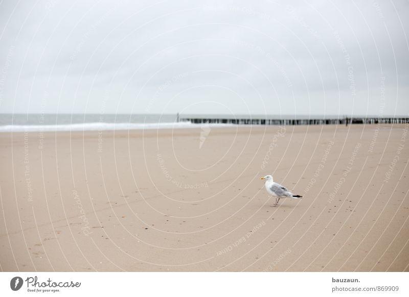 warten. Himmel Natur Ferien & Urlaub & Reisen Sommer Meer Erholung Wolken Tier Strand Ferne Umwelt Küste Freiheit Sand Vogel Wetter