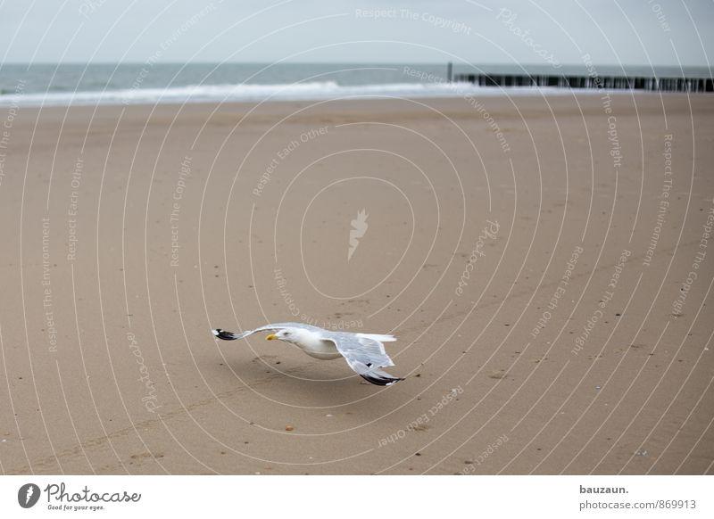 abflug. Ferien & Urlaub & Reisen Ausflug Ferne Freiheit Sommer Sommerurlaub Strand Meer Wellen Himmel Wolken Klima Wetter Küste Nordsee Vogel Möwe 1 Tier Sand