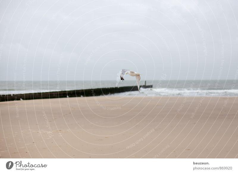abdrehen. Himmel Ferien & Urlaub & Reisen Sommer Meer Wolken Tier Strand Ferne Küste Freiheit Linie Sand fliegen Horizont Vogel Wetter