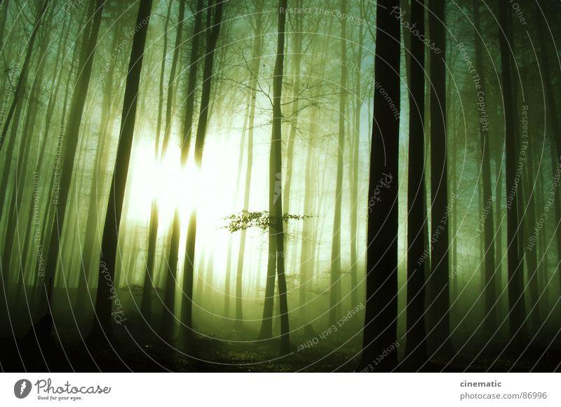 Blair Witch Natur Pflanze Sonne Blatt Einsamkeit Wald Umwelt Luft Erde Bodenbelag Sträucher Ast Idylle Baumstamm unheimlich abgelegen