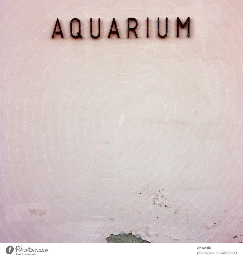 Buckelwal Aquaristik Aquarium Haus Mauer Wand Fassade Putz Schriftzeichen rosa Stadt Typographie Farbfoto Außenaufnahme Strukturen & Formen Textfreiraum links