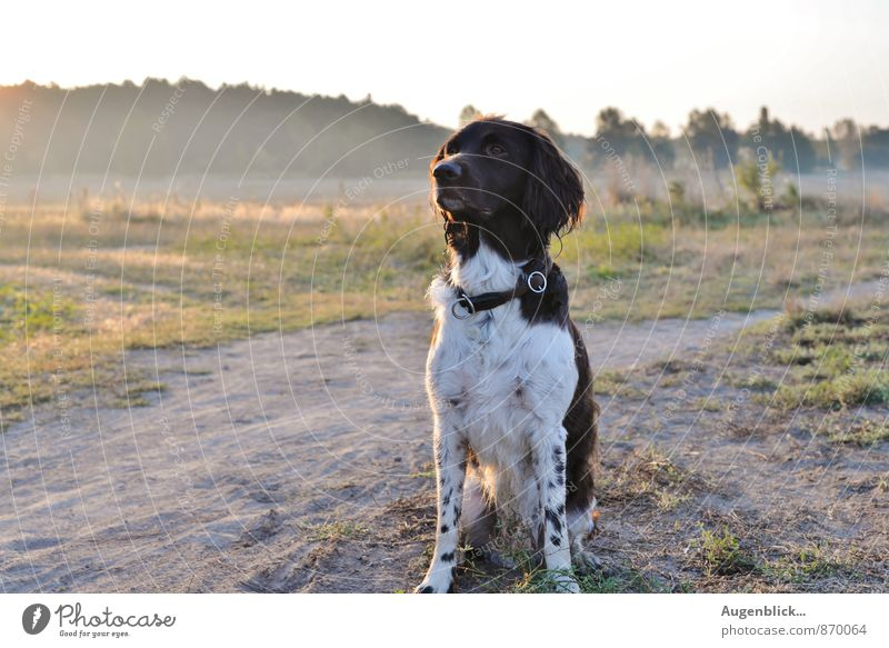 ganz früh... Hund ruhig Tier Freude Leben Bewegung natürlich Spielen Glück Zufriedenheit frisch Kraft Fröhlichkeit laufen Lebensfreude Gelassenheit
