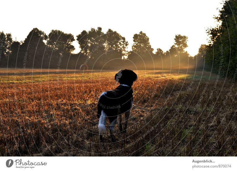 ganz früh... zwei Tier Hund 1 beobachten Denken träumen warten Freundlichkeit Fröhlichkeit Glück natürlich loyal Freundschaft Tierliebe achtsam Wachsamkeit