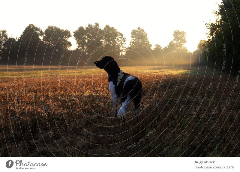 ganz früh... drei Hund Erholung ruhig Tier natürlich Glück glänzend Idylle Zufriedenheit gold frei genießen beobachten Gelassenheit friedlich