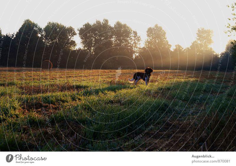 am frühen Morgen... Hund ruhig Tier Leben Freiheit Freizeit & Hobby Zufriedenheit Neugier Gelassenheit friedlich