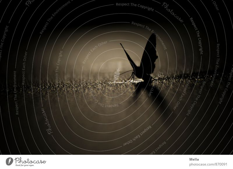 Carpe noctem Umwelt Tier Wassertropfen Wildtier Schmetterling Motte 1 Tropfen ästhetisch dunkel glänzend gruselig natürlich schwarz Stimmung geheimnisvoll Natur