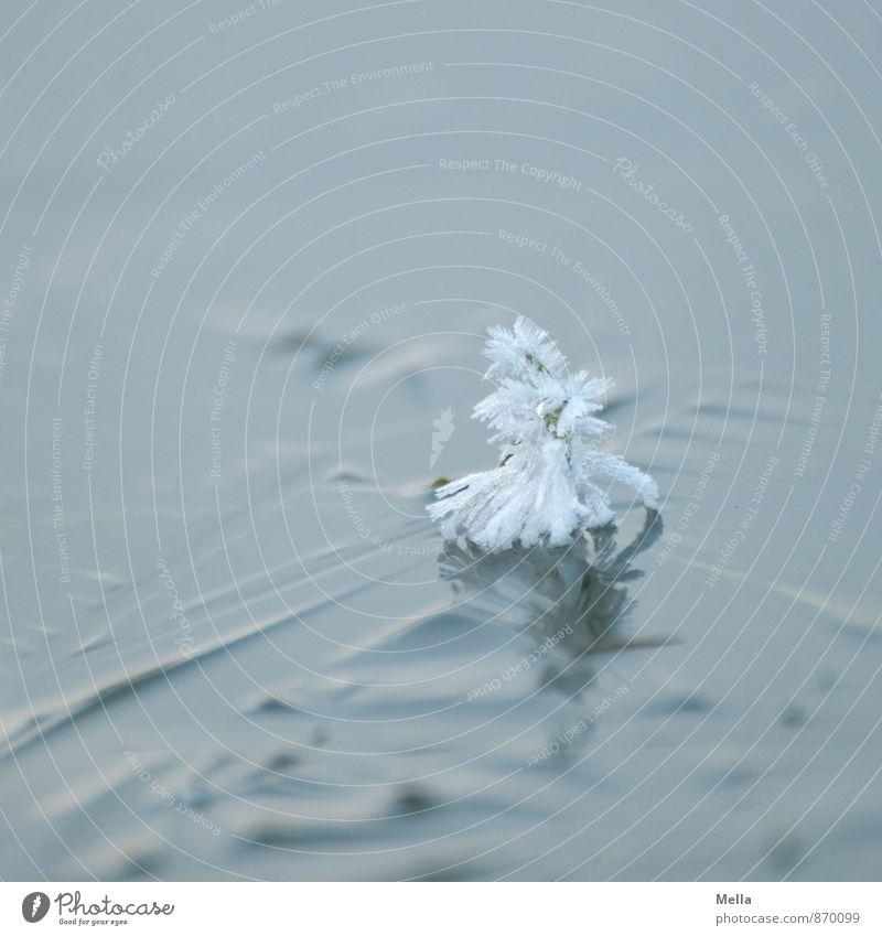 Dannebäumsche Natur blau Weihnachten & Advent weiß Winter kalt Umwelt Schnee klein grau außergewöhnlich See Stimmung hell Eis ästhetisch