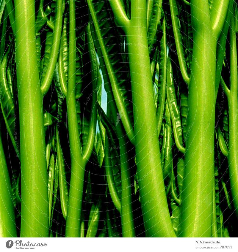 feel GRÜN ... grün Stengel Sträucher Baumkrone nah frisch Leben Urwald lustig Gewächshaus Sommer Makroaufnahme Nahaufnahme fröhlig Strukturen & Formen