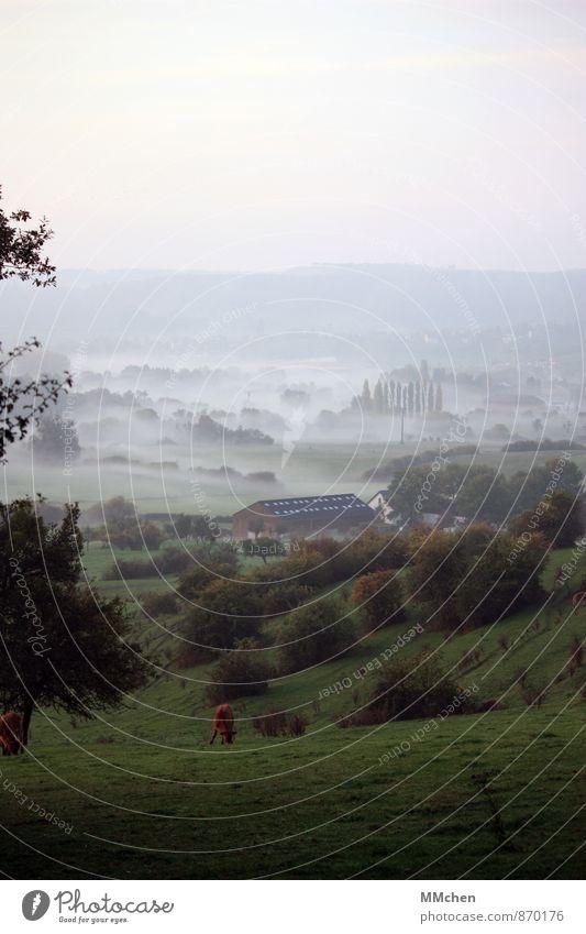 Tal Natur grün Baum Landschaft Tier Ferne Herbst Wiese Gras Horizont Zufriedenheit Feld Nebel Idylle trist wandern