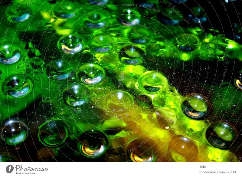 über dem wasser...~nanana~ Natur Wasser grün schön Freude Umwelt nass Elektrizität Fisch feucht Aquarium himmlisch attraktiv Wunder Mineralwasser hellgrün