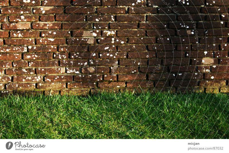 mein unsichtbarer Freund Natur weiß grün Sonne Farbe Umwelt Wiese Gras Mauer 2 braun Feld Wildtier dreckig Platz Baustelle