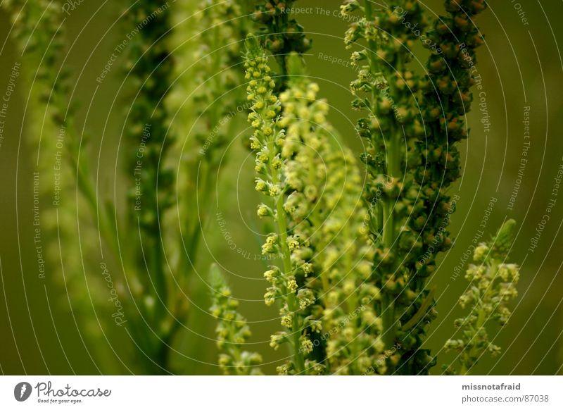 Grüne Pflanzenpracht Natur grün Sommer Pflanze Umwelt Wiese Blüte Weide Umweltschutz Botanik Wildpflanze prächtig