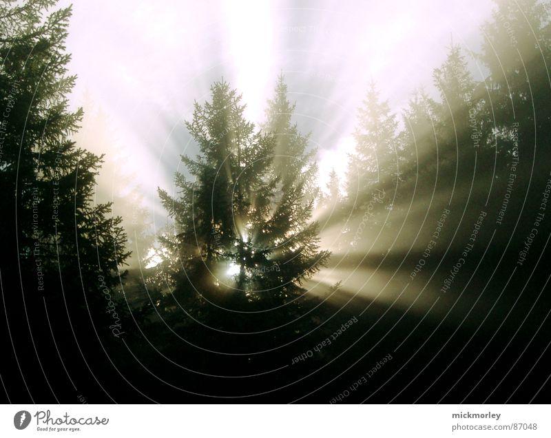 baumlicht Licht Wald Tanne Entführung Sonne Sonnenlicht Lichtstimmung lichtbruch durschscheinen Außerirdischer Graffiti