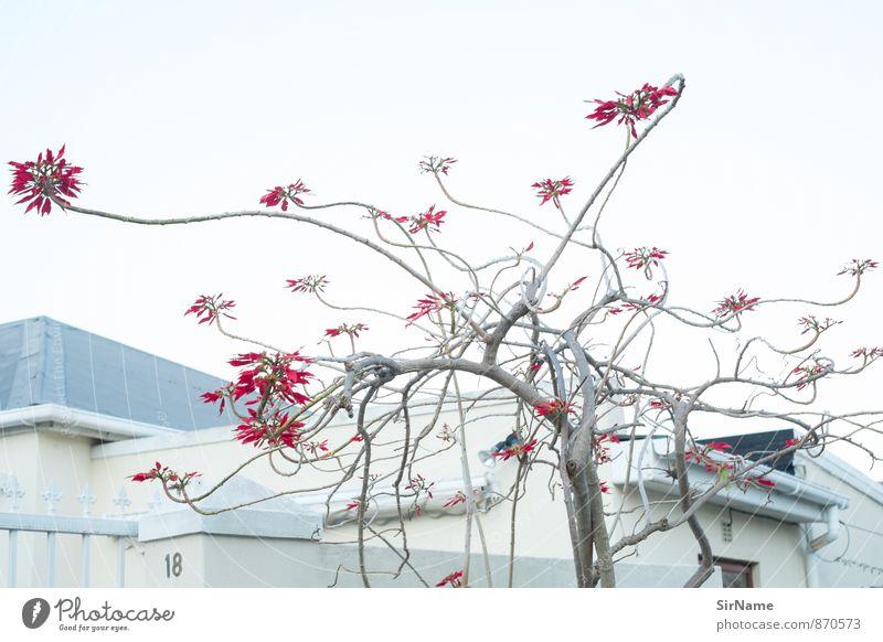 274 [Linienmusik] Natur Stadt Pflanze schön Baum Haus Umwelt Wand Blüte Mauer Gebäude natürlich Holz außergewöhnlich Garten Park