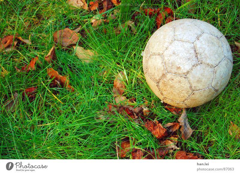 Kick it... grün Freude Blatt Sport Wiese Spielen Gras Garten grau Fußball braun Erfolg Platz Rasen rund