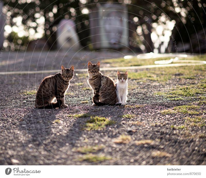 Was guckst Du? Tier Haustier Katze 3 Tiergruppe Tierjunges Tierfamilie beobachten Blick sitzen kuschlig Neugier braun gelb violett Tierliebe achtsam Wachsamkeit