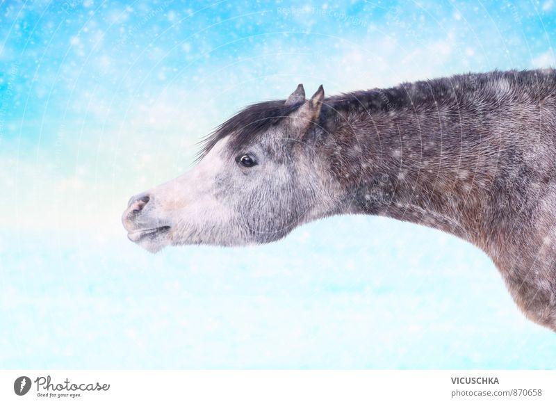 Horse in winter snowfall Natur Freude Tier Winter Glück Lifestyle Zufriedenheit Wildtier Fröhlichkeit Pferd Haustier horizontal Nutztier