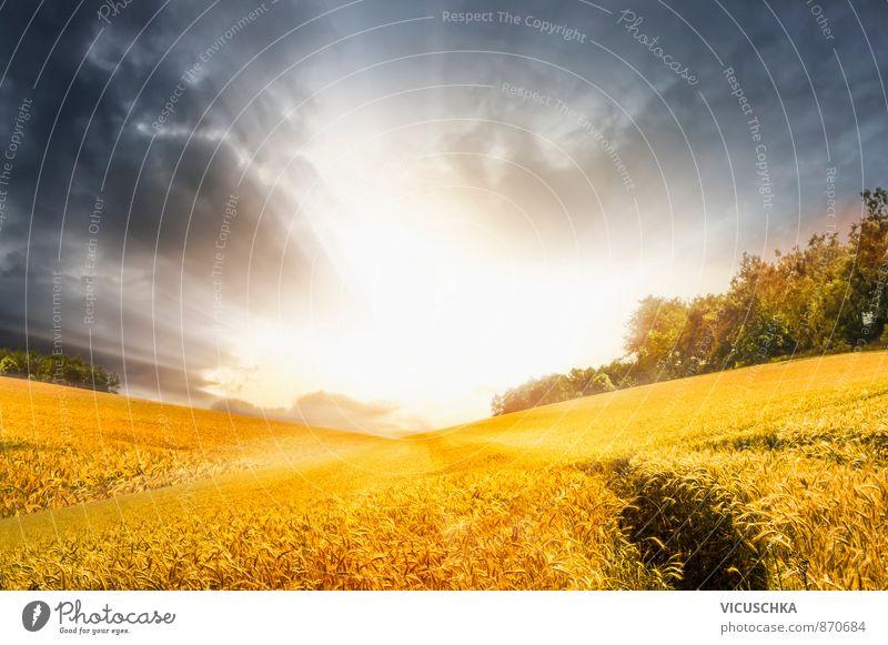 Herbst Landschaft mit stürmischen Himmel und Sonnenschein Natur blau Sommer ruhig gelb Wiese Hintergrundbild Horizont Freizeit & Hobby Feld gold planen Hügel