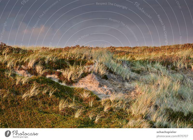Dünen Himmel Natur blau grün Landschaft Stimmung braun Nordsee Dünengras