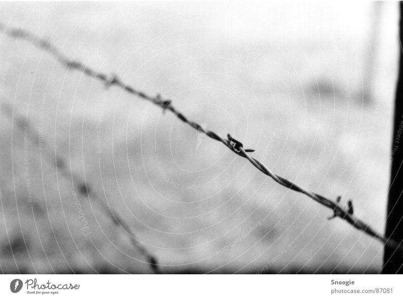 barbed wire of death weiß schwarz Gefühle grau Traurigkeit Angst gruselig Stahl Denkmal Todesangst Panik Aggression Entsetzen Sehenswürdigkeit Polen