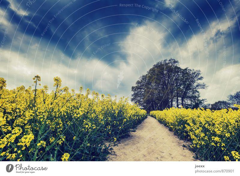 Auf und davon Natur Landschaft Himmel Wolken Sommer Schönes Wetter Baum Nutzpflanze Feld Wege & Pfade Idylle ruhig Farbfoto Gedeckte Farben Außenaufnahme