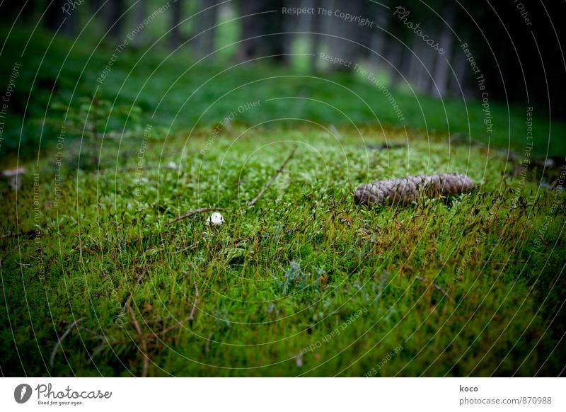 An einem verwunschenen Ort (IV) Umwelt Natur Landschaft Pflanze Erde Frühling Sommer Herbst Baum Gras Moos Zapfen Pilz Wald Wachstum dunkel authentisch einfach