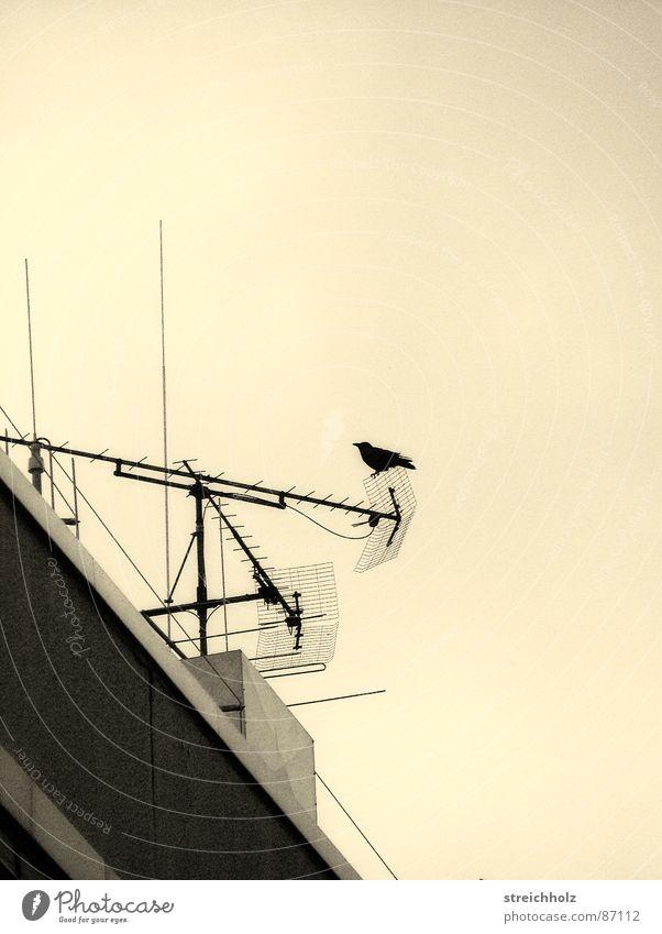 Vogel auf Dach Haus Feder Antenne Funken Spaßvogel Verständigung Funkturm Pechvogel Informationsaustausch Kommunikationsmittel Diskussionsleiter