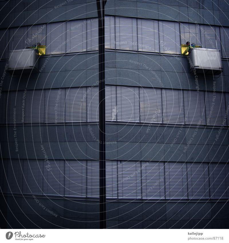 stalking Fenster Gebäudereiniger Fensterscheibe Reinigen Wischen spannen Hochhaus luftig schwindelfrei Arbeit & Erwerbstätigkeit Etage Arbeiter Durchblick