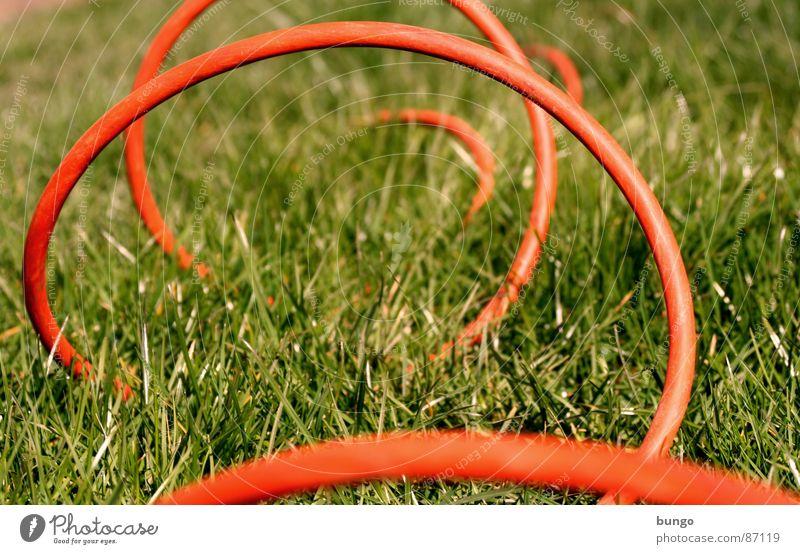 Keep Rollin' Pflanze Sommer Wiese springen Gras Frühling Garten Linie Elektrizität Kommunizieren Kabel Bodenbelag Verbindung Kurve Halm verbinden