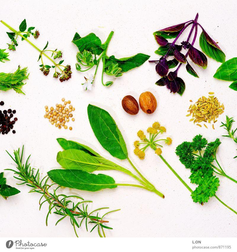 Kräuter & Gewürze Lebensmittel Salbei Petersilie Rosmarin Muskat Pfeffer Kerbel Ernährung Bioprodukte Vegetarische Ernährung Pflanze Blatt Blüte Grünpflanze