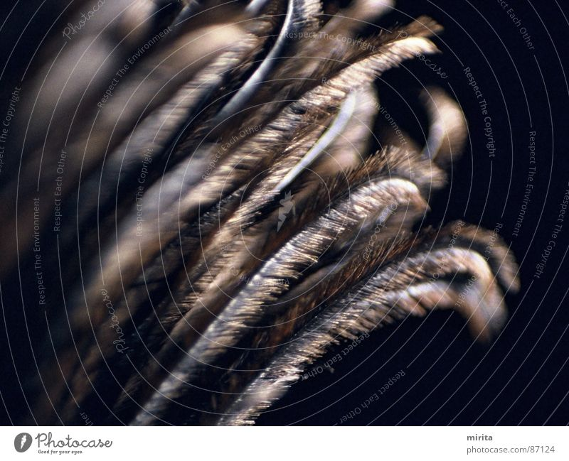 Feder Boa schwarz Schmuck leicht Vogel Tier mausern Federvieh Zoo Fabelwesen dunkel Federbett weich federartig Daune Federbalg Federband Federbügel Federkörper