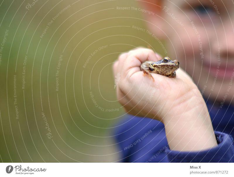 Hallo Frosch Mensch Kind Natur Hand Tier Wald Junge Spielen See Freizeit & Hobby Kindheit Lächeln festhalten fangen Kleinkind Bach