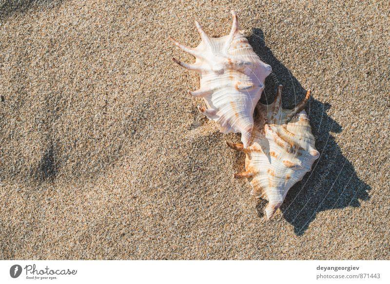 Muscheln am Strand exotisch Erholung Ferien & Urlaub & Reisen Tourismus Sommer Sonne Meer Wellen Natur Landschaft Sand Himmel Küste blau weiß Idylle Panzer