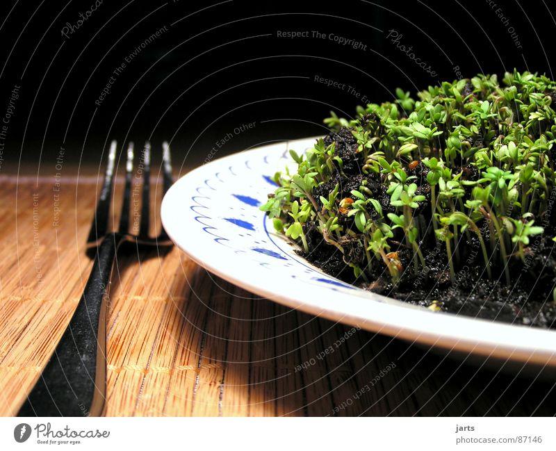 Vegetarisch grün Ernährung Leben Gesundheit Kräuter & Gewürze Gemüse genießen Teller ökologisch Mahlzeit Vitamin Mittagessen pflanzlich Feinschmecker Vegetarische Ernährung Kresse