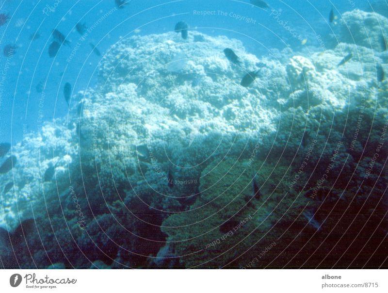 Korallen Wasser Meer blau Fisch Unterwasseraufnahme