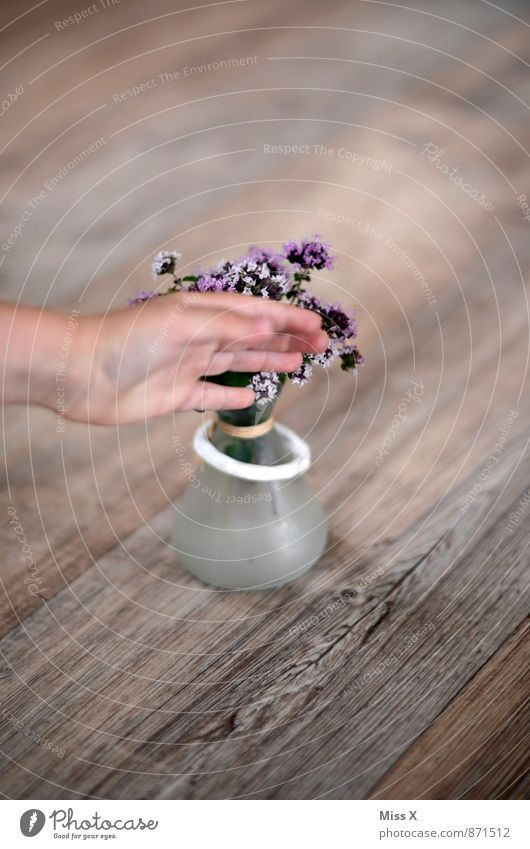photobomb Lebensmittel Kräuter & Gewürze Ernährung Italienische Küche Dekoration & Verzierung Hand Finger berühren Blühend Duft violett Thymian Farbfoto
