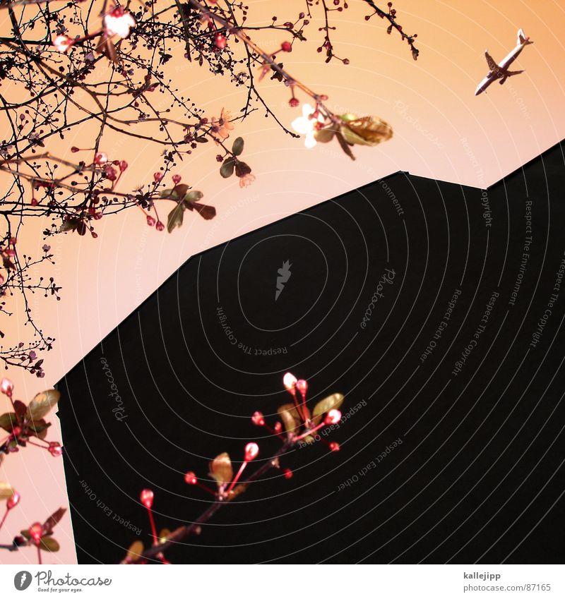 big in japan Himmel Stadt Ferien & Urlaub & Reisen Haus Frühling Raum Architektur Flugzeug Beginn Romantik Häusliches Leben Sehnsucht Weltall Umzug (Wohnungswechsel) Maschine Japan