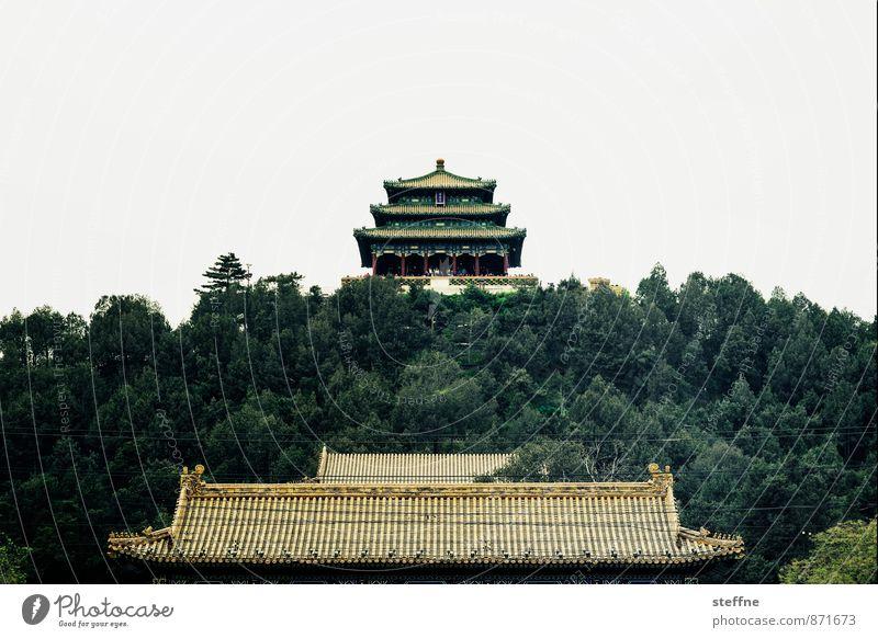 Kohleberg Baum außergewöhnlich Wahrzeichen Sehenswürdigkeit China Altstadt Palast Peking Verbotene Stadt Asiatische Architektur