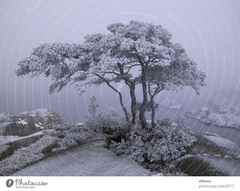 beschneiter Baum Winter Schnee Berge u. Gebirge Wasser Eis Natur Amerika Schweden